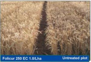 Treated and Un-Treated Wheat