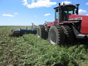 Cultivating Weeds in Australia
