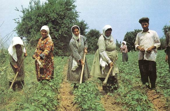 Women Handweeding Cotton