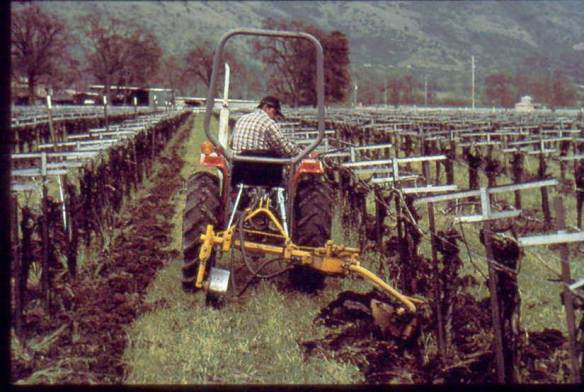 Cultivating Grape Vineyard