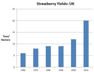 Strawberry Yields: UK