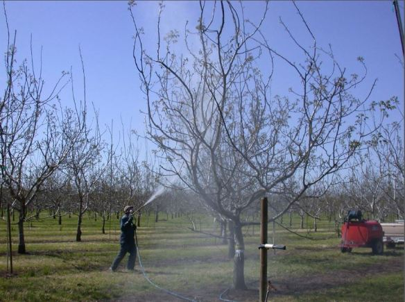 Walnut Blight Spraying
